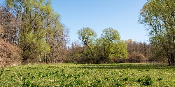 Tavasz a Szentmihályfai-patak völgyének fűz- és égerligeteiben