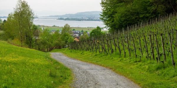 Weingut Irsslinger in Wangen