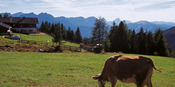 The Taistner Vorderalm alpine pastures, in the back the Dolomite mountains.
