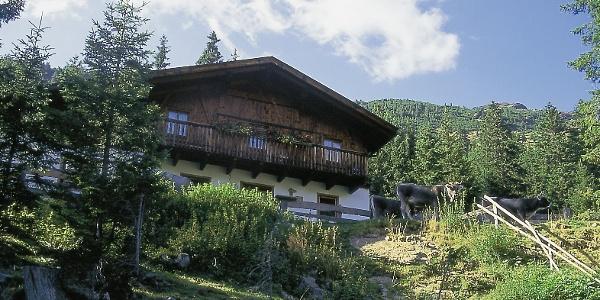 Seebalm oberhalb Durnholz