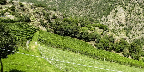 Ausgangspunkt der kurzen Wanderung ist beim Gasthaus Schlosswirt in Juval.