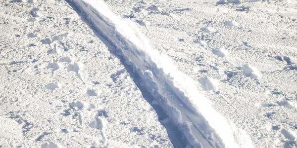 Lange und anspruchsvolle Skitour vom Pfossental auf die Marzellspitzen.