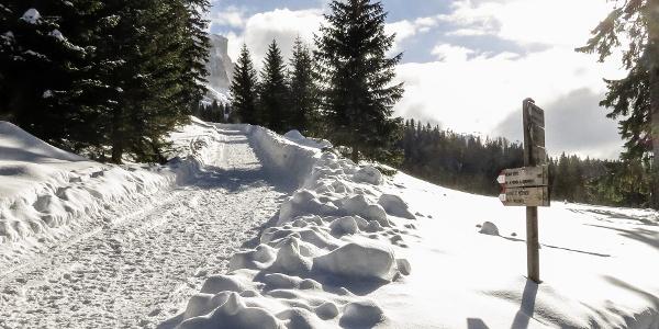 Lustige Rodelpartie vom Messnerjoch zum Nigerpass am Fuße des Rosengartens.