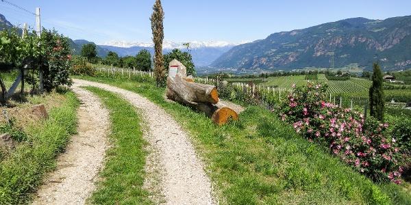 Auf dem Weinlehrpfad durch die Weinberge von Girlan mit grandiosen Ausblicken.