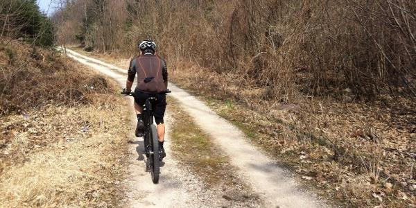 Im Frühjahr und Herbst sind die Forstwege in Montiggl meist menschenleer.