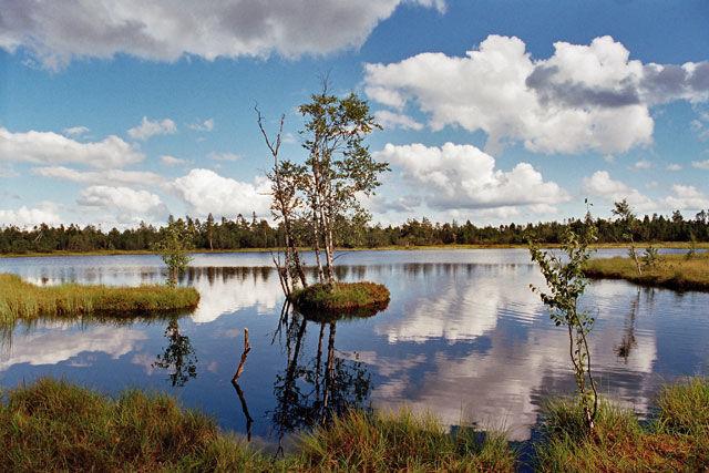 Das Hochmoorgebiet in Kaltenbronn