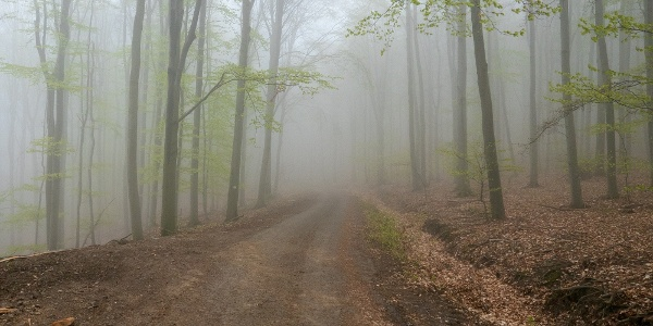 Sejtelmes köd az erdészeti aszfaltutas szakaszon