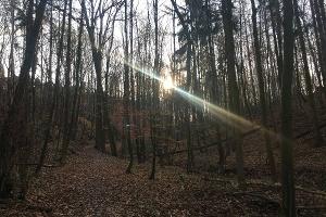 Foto Wanderweg hinauf nach Köttewitz