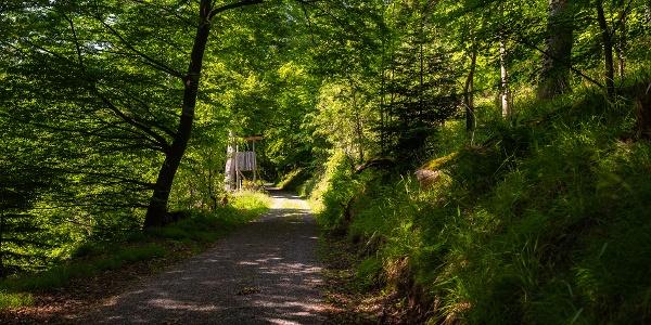 Gemütliche Waldwege führen durch des Jägers Revier