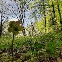 Immagine del profilo di Mirko Donatini