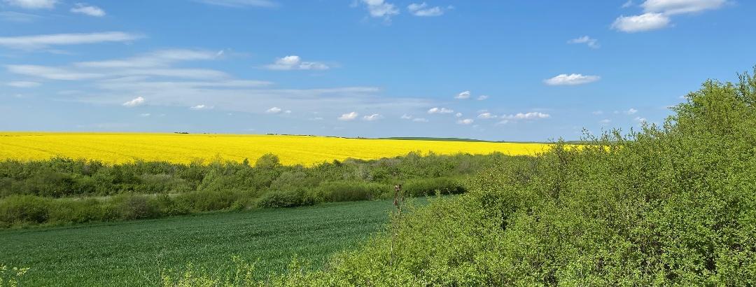 Primăvara în apropiere de Timișoara