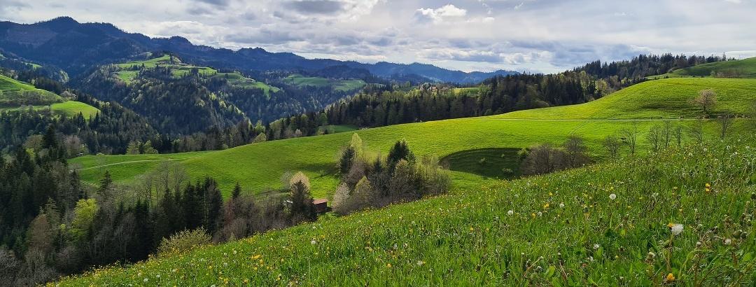 Typische Napflandschaft bei Menzberg