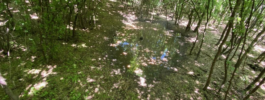 În pădure umezeala persistă