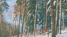 Mudau: Lange Loipe Reisenbach