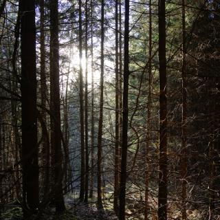 Aufstieg durch dichten Wald zu den Isarhöhen