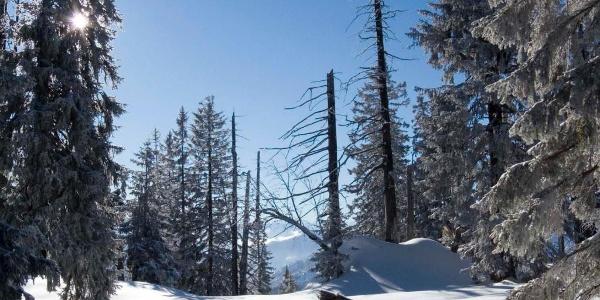 So schaut der Gipfel des Stolzenbergs aus.