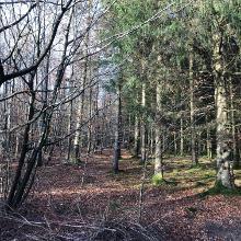 Rechts Tannenwald und links der Buchenwald