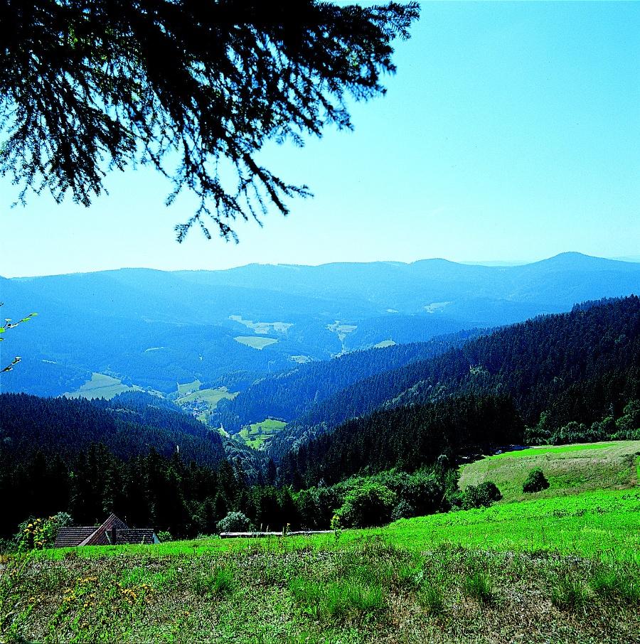 Bad Rippoldsau - Blick aufs Wolftal
