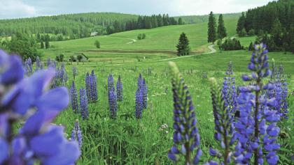 Sommerwiese im Ferienland