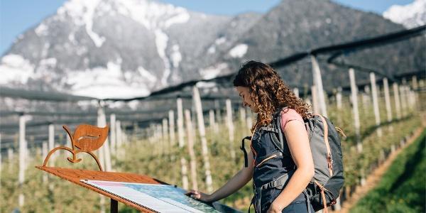 Apfelweg - Dorf Tirol