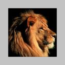 Profilbild von stefano sanesi