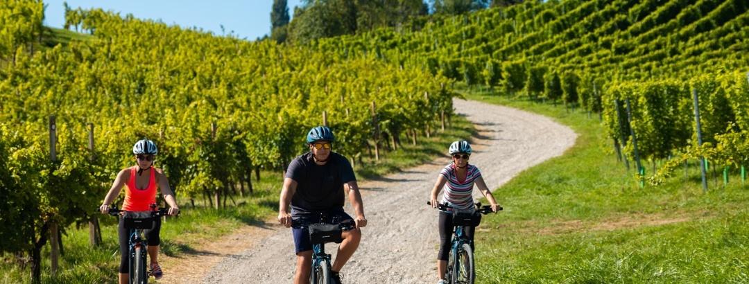 Cycling through the vineyards of Maribor