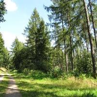Wälder bei Hülschotten