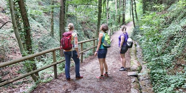 Wir genießen den idyllischen Wald beim Aufstieg