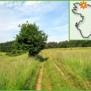 Wiesenlandschaft bei Kall