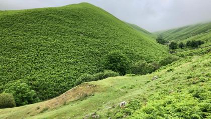 Fern-covered hills in Tongue Gill