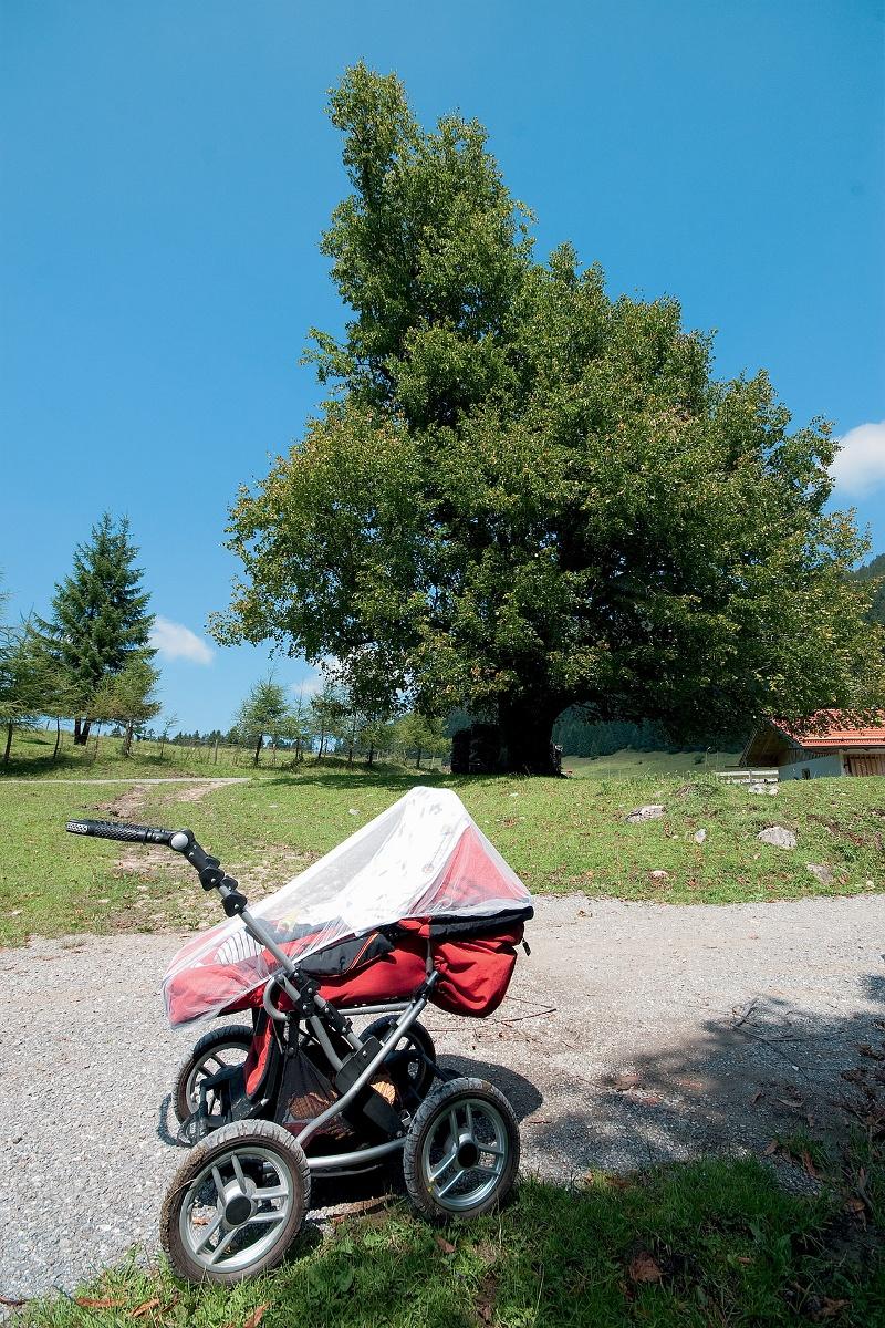 Mit dem Kinderwagen zur Schlipfgrubalm