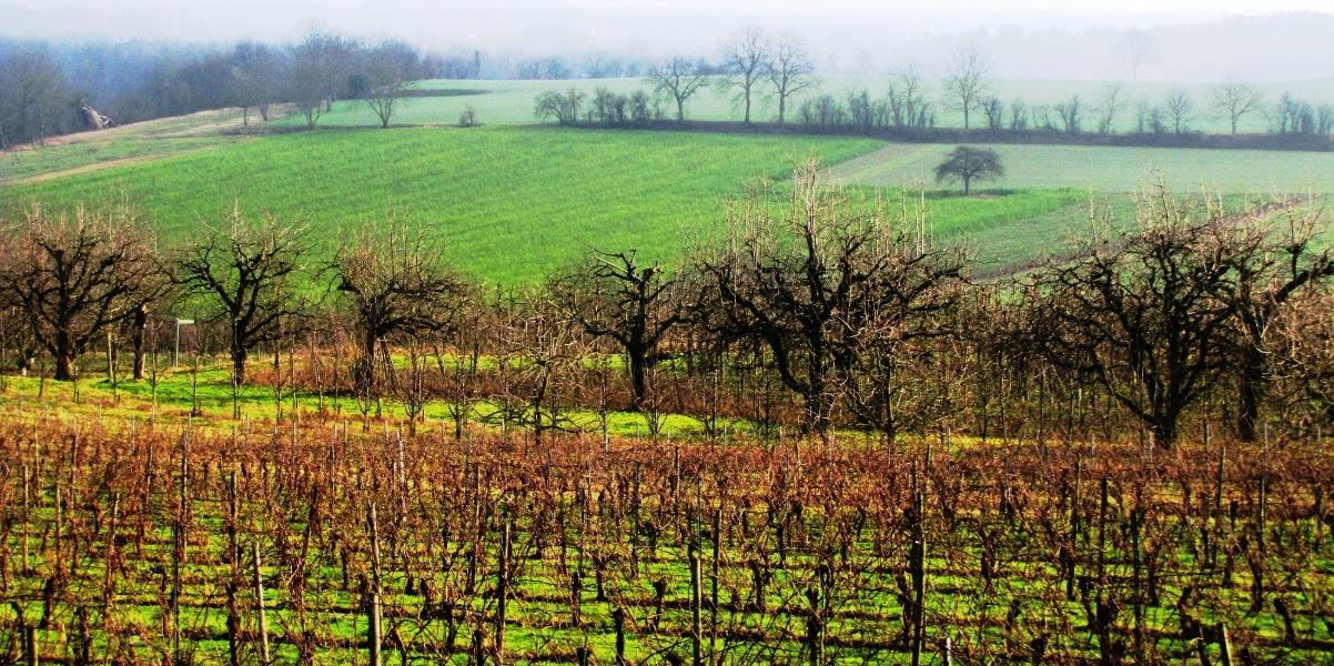 Der Nimbergpfad in Teningen-Nimburg