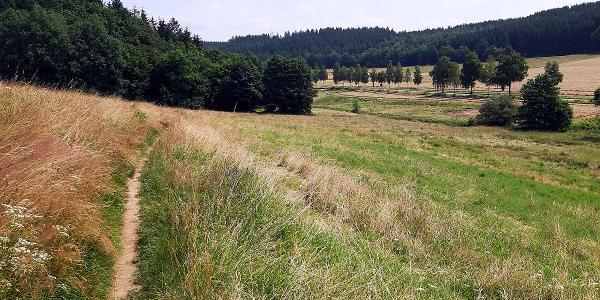 Kurzer und schöner Wiesenpfad zwischen Kaan und Volnsberg