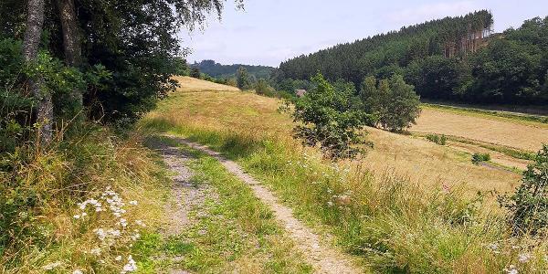 Breitere grüne Wege  - vor Breitenbach
