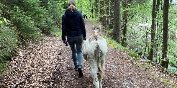 Wanderung mit einem Esel
