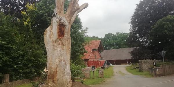 Markanter Baum in Hörpel