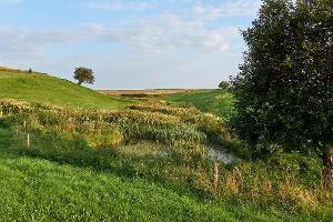 Foto Biotop Wendischauer Weg