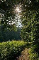 Foto Wanderweg an der Polenz