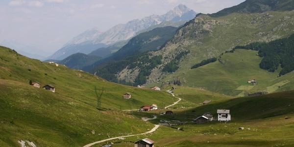 Blick über das Val Tgavregta mit den Alpen, die von Bergellern bestellt wurden.