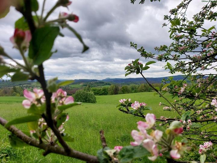 Foto Blick in die Hintere Sächsische Schweiz vom Panoramaweg