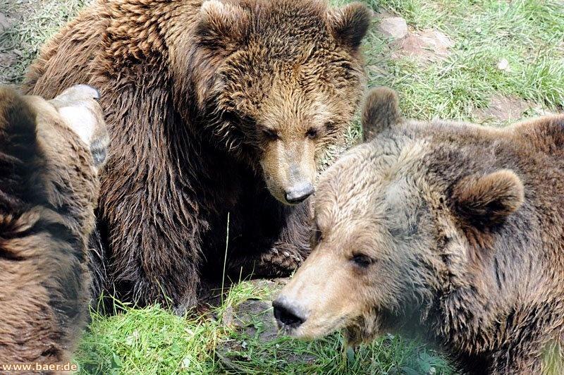 Bären-Tour