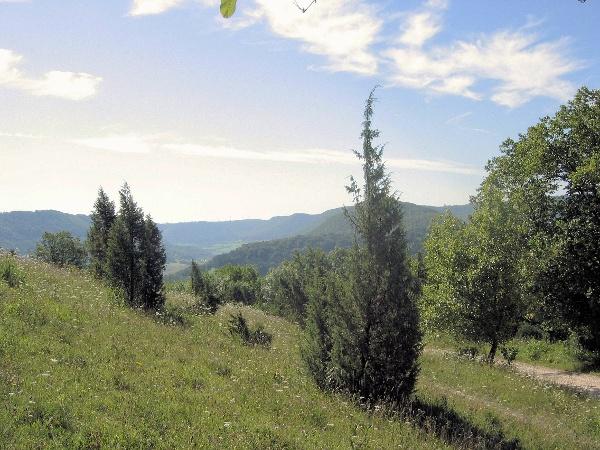 Wacholder auf dem Wasserberg, Blick zum Gairensattel
