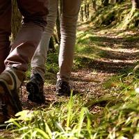 Von der Mosel in den Wald: Maria-Zill Panoramaweg