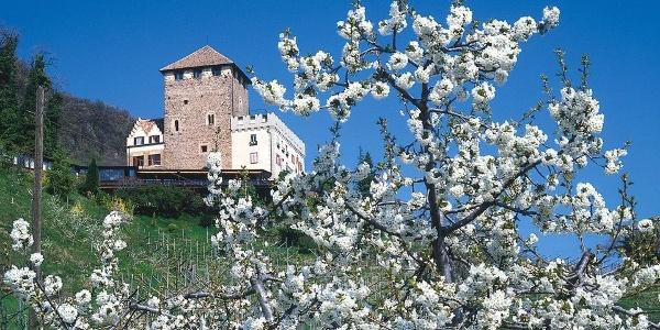 Frühlingsgefühle bei Schloss Korb