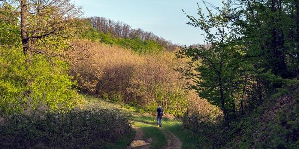Kényelmes út a Szarvas-kő gerincén