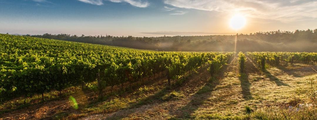 Coucher de soleil sur les vignes des Corbières