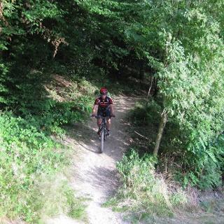 Mountainbiker auf Singletrail