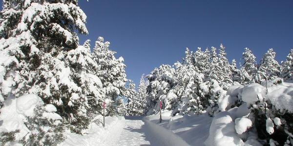 verschneite Landschaft bei Chamues-ch