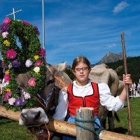 Großes Fest mit geschmückten Kühen