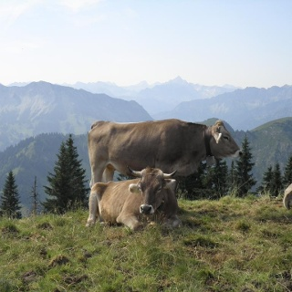 Blick vom Steinpasssattel